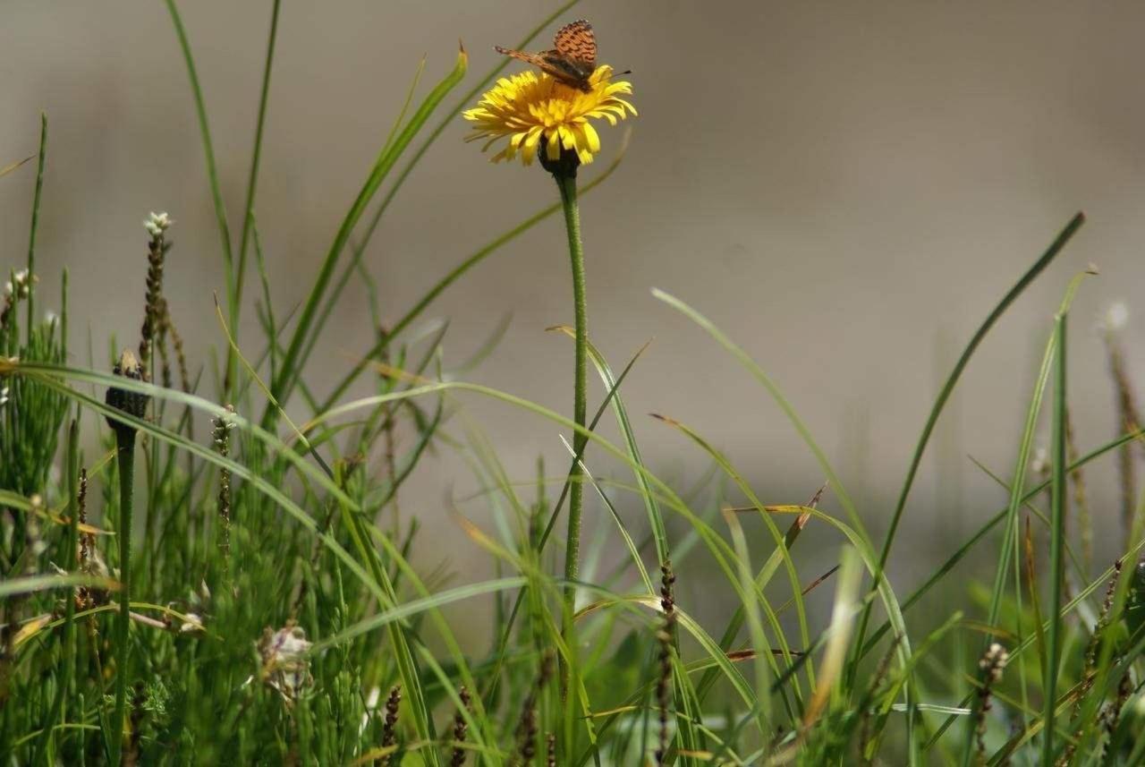 Wiese mit Blume und Schmetterling